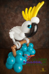 balloon artist - balloon cockatoo